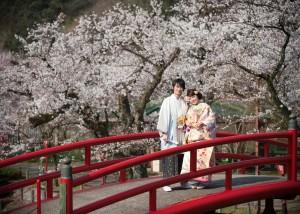 『桜フォトウェディング相談会』
