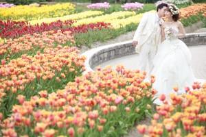 『桜・チューリップフォトウェディング』