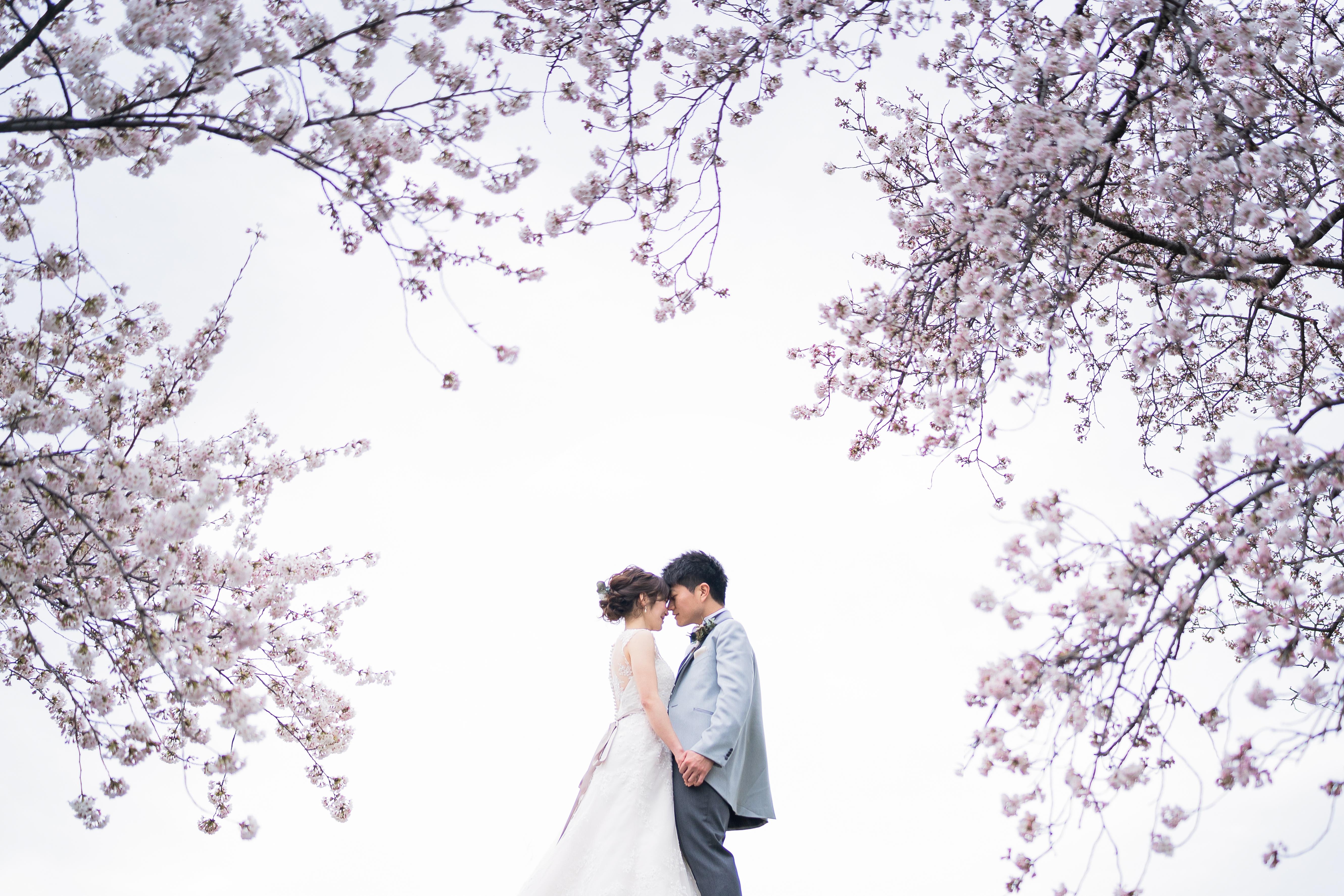 🌸大人気!桜フォト🌸